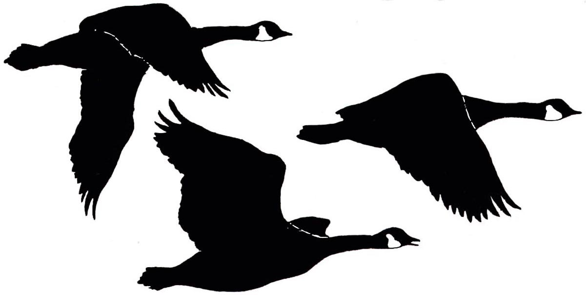 Geese Graphic